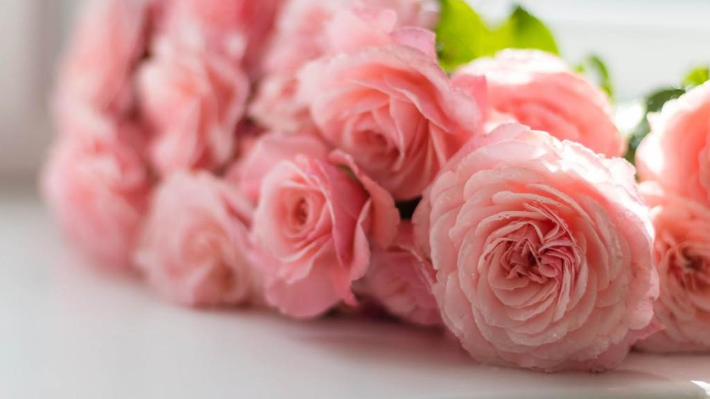 英音读诗:爱情是朵玫瑰,友情是棵冬青👭