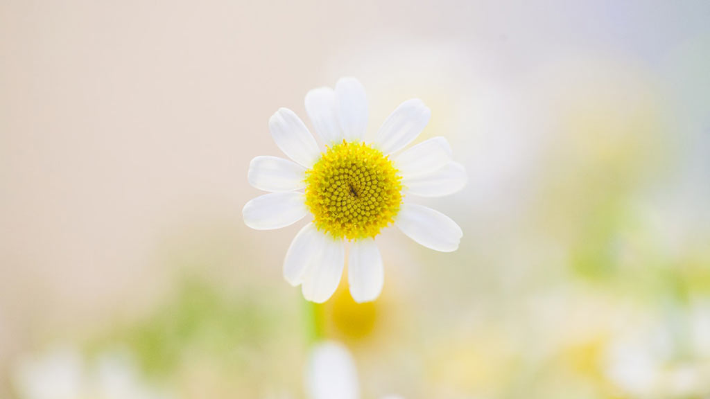 """春天来啦,一首 """"春之信仰"""",来迎接春天的到来吧 🌸"""
