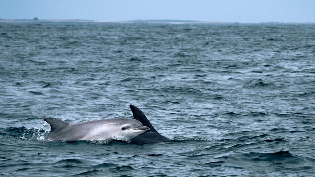 夏天到了,一起去布列塔尼的伊洛瓦茲海洋自然公園看海豚吧~