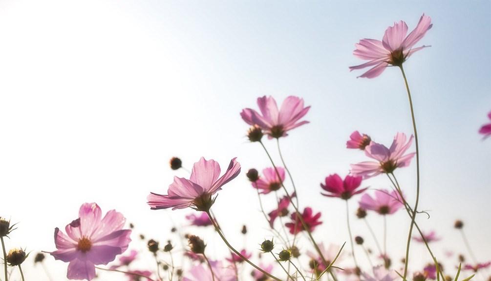微風不燥,陽光正好,一起來讀詩:憧憬 - Eichendorff